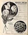 Wholesale price list of requisites for florists and market gardeners (16589158770).jpg