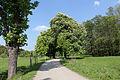 Wien-Hietzing - Lainzer Tiergarten - Weg über die Bischofswiese.jpg