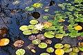 Wikipedia 13. Fotoworkshop Botanischer Garten Erlangen 2013 by-RaBoe 067.jpg