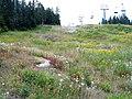 Wildflowers (2917940936).jpg