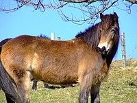El caballo cimarron 200px-Wildhorse042