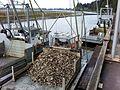 Willapa Oysters - panoramio.jpg