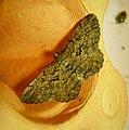 Willow Beauty (47971151398).jpg