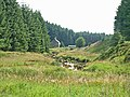 Willowbog, Kielder Forest - geograph.org.uk - 209674.jpg