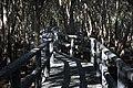 Winding Boardwalk of LPPCHEA.jpg