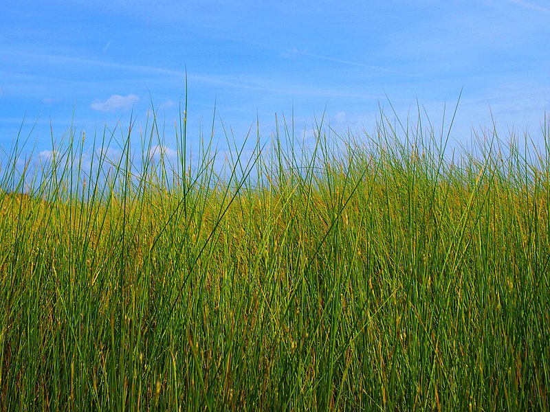 File:Windows della Sardegna, spiaggia di Isuledda - panoramio.jpg