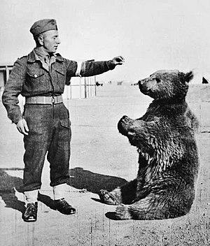 Wojtek (bear) - Wojtek with a fellow Polish soldier in 1943