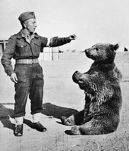 File:Wojtek the bear.jpg