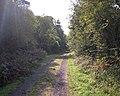 Woodland Walk - geograph.org.uk - 2084718.jpg
