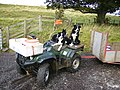 Working dogs at Hethpool - geograph.org.uk - 570781.jpg