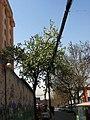 Xincheng, Xi'an, Shaanxi, China - panoramio - monicker (11).jpg