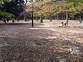 Yoyogi Park - panoramio.jpg