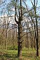 Zahrebellia-dendropark-15045793.jpg