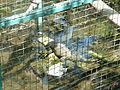 Zapari zoo iguana.jpg