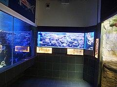 Zoo Hodonín, podmořský svět (5).jpg