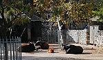 Zoo de Lisboa by Juntas 58.jpg
