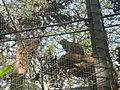 Zoológico de Cali 130.JPG