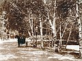 """The Pretty Birch Drive."" (View of Forest Park prior to construction for the 1904 World's Fair).jpg"