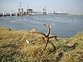 'ANCHOR' and boats, the source of Mumbai's birth as a Megapolis city..JPG