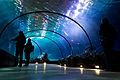 (66-365) Underwater tunnel (5335972173).jpg