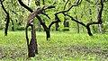 Ієрогліфи парку «Хутір Надія» №3.jpg