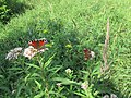 Бабочки 2.jpg