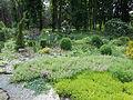 Ботанічний сад ДНУ 51.JPG