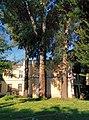 Група вікових дерев топлі білої 4.jpg