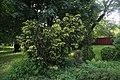 Дендрарій Київського зоопарку (масив дерев) IMG 3406.jpg