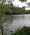 Лебідь на фоні черленківського замку P1210503.jpg