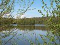 Озеро в Моршині - panoramio.jpg