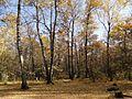 Осенний лес - panoramio (25).jpg