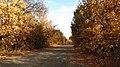 Осенняя дорога - panoramio (5).jpg
