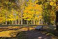 Осень в парке Ораниенбаума.JPG
