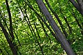 Парк Аскольдова могила у Києві. Фото 9.jpg