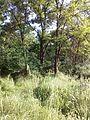 """Парк шума """"Гази Баба"""" 14.jpg"""