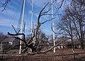 Семисотлітній Запорізький дуб.jpg