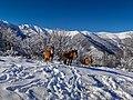 Снежни коне.jpg