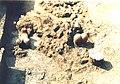 Сонда, неолитско налазиште Благотин (8).jpg