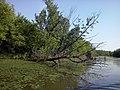 Специјални резерват природе Царска бара, 003.jpg