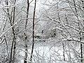 Чернігів. Міський сад. Снігові мережива.JPG