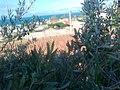 منطقةالبحر الابيض المتوسط من المناطق التي تنتشر بها زراعة الزيتون - panoramio.jpg
