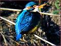 پرنده ای تنها - panoramio.jpg