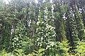奥新川 - panoramio (2).jpg