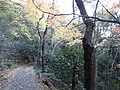 岐阜市 - panoramio (17).jpg