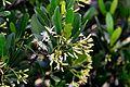 紅樹林DSC 4436.jpg