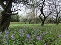 花園 - panoramio (2).jpg