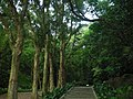 虎頭山公園 步道 - panoramio.jpg