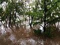 被淹没的树木.jpg