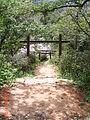 金字碑古道 侯硐神社 Venation.JPG